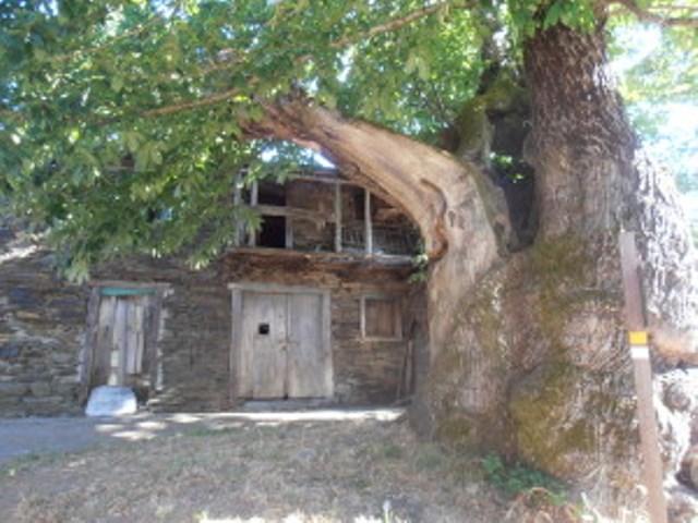 Etappe 102: Fontfria - Samos